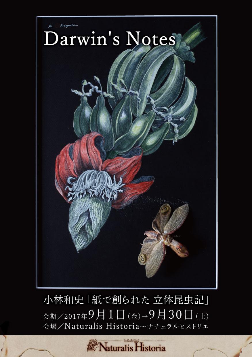 ダーウィンのノート-小林和史 「紙で創られた 立体昆虫記」-