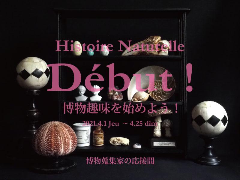 博物蒐集家の応接間 『Début!Histoire Naturelle   博物趣味を始めよう! 』